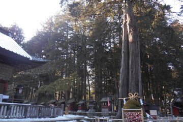 Прекрасные священные деревья