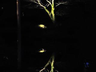 Khi mặt trời lặn, cây cối bên hồ soi bóng lên mặt nước