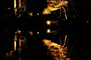 <p>Trees illuminated in golden hues at Kenrokuen Garden</p>