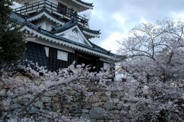 Hamamatsu Castle tower with the cherry blossoms in bloom