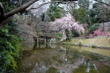 One of the ponds near the castle with the cherry blossoms in bloom