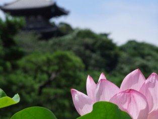 Sankei-En Garden, Yokohama
