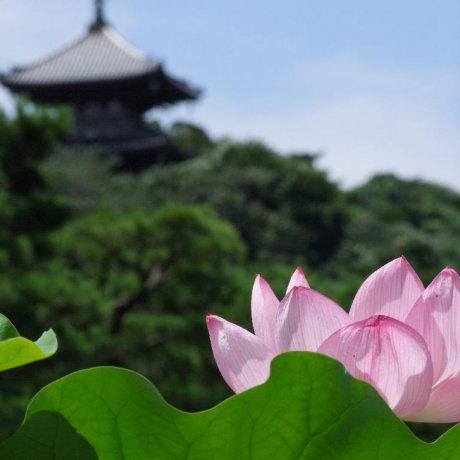 A Stroll Through Sankei-En Garden