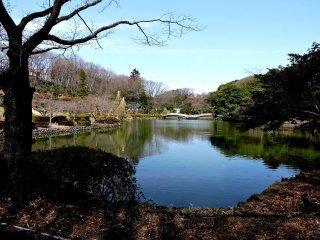 Pond at Yakushiike Park