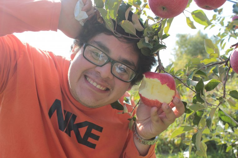 아오모리의 놀라운 사과