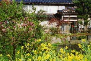 Penginapan Minshuku saat musim semi