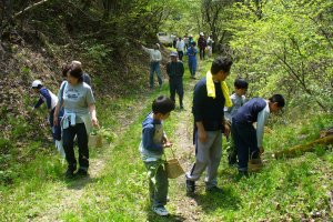 Gathering mountain and woodland vegetables in the spring