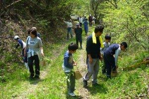 Mengumpulkan sayuran dari pegunungan dan hutan pada musim semi