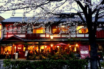 Cherry Blossom Evenings in Kyoto