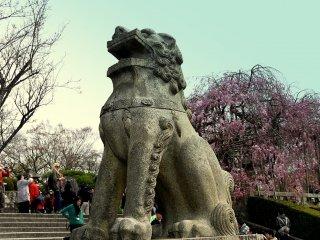 Patung singa penjaga dengan latar belakang sakura