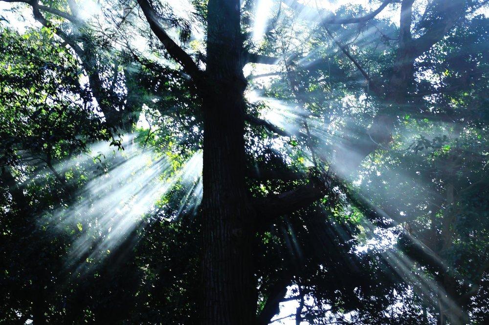 早い時刻の参拝だったが、射しかかった朝陽が眩しくて神々しい光に見えた!