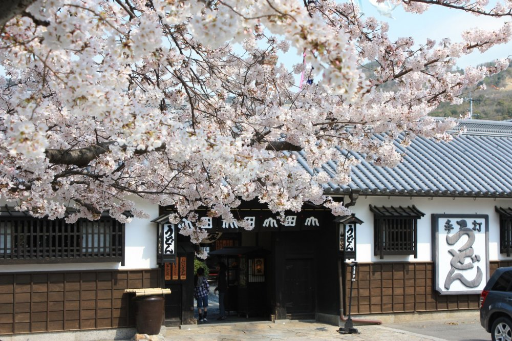 Yamadaya com flores de cerejeira