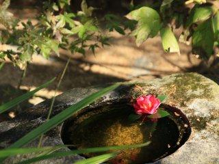 Tsukubai, um recipiente de pedra com água no jardim