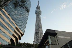 โตเกียวสกายทรี หอคอยที่สูงที่สุดในโลก