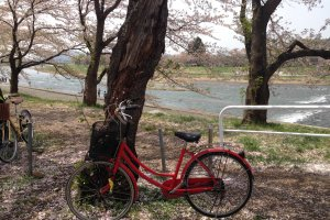 A riverside picnic underneath the cherry blossoms?  Take the gentle way by bicycle.