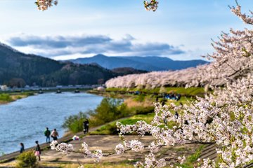 Kakunodate is a beautiful place to cycle in Spring