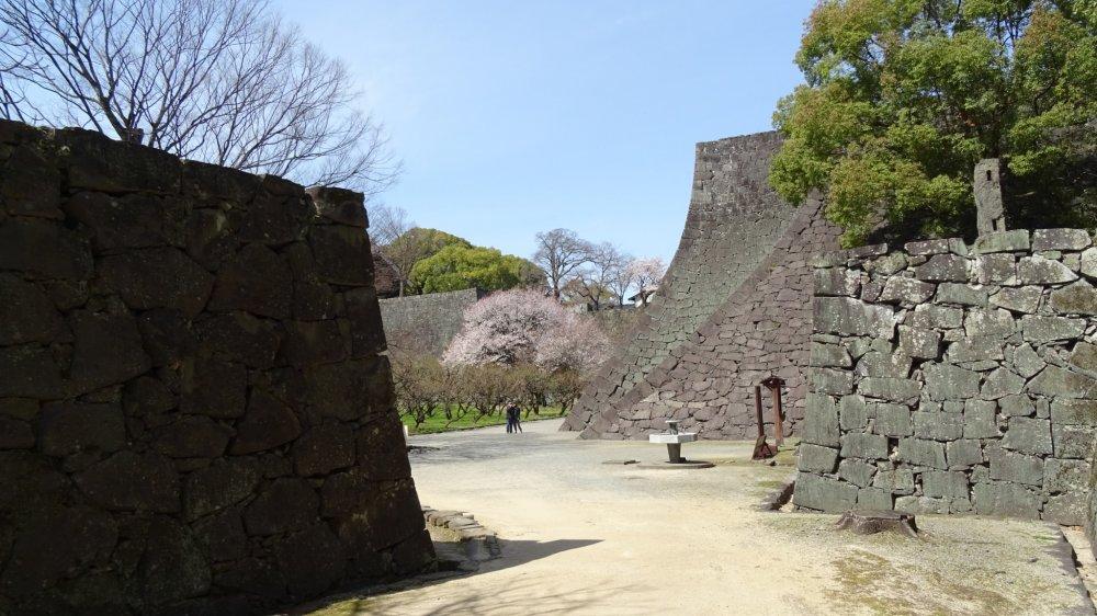 ซากุระกับกำแพงปราสาท