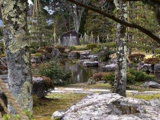 나무를 통해 바라본 정원 연못