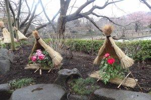 โบตั๋นแต่ละต้นจะอยู่ภายใต้เต็นท์รูปกรวย ทำด้วยฟางข้าวเพื่อปกป้องกลีบบอบบางของดอกโบตั๋นจากสายลมหนาว