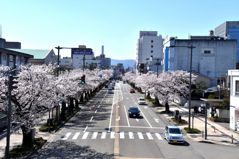 <p>Sakura Street in Fukui seen from a pedestrian bridge (sakura means cherry blossoms)</p>