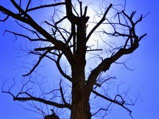 太陽を背に聳え立つ力強い裸木