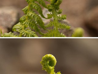 … and amazing looking fern
