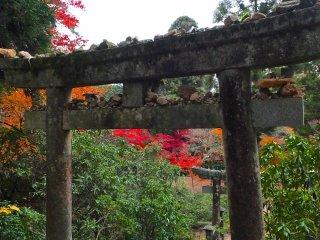 Portões torii de um santuário da ilha