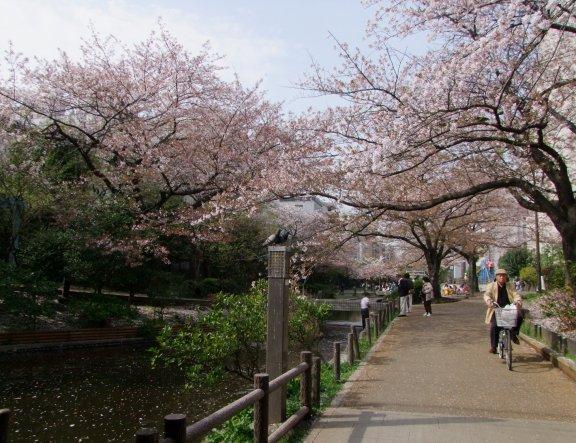 Sakura no Parque Oyokogawa-Shinsui