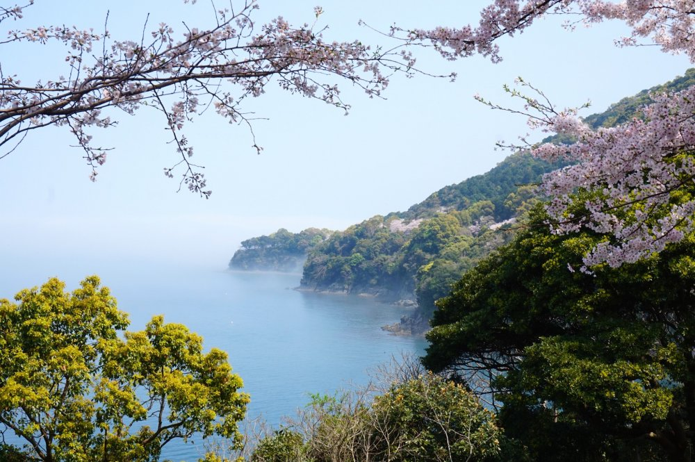The contrast of pink, green, and turquoise blue that is characteristic to the Yunoko Cherry Line is one of the reasons it has been selected as one of the top 100 places to view cherry blossoms in Japan.