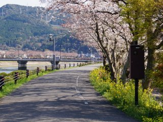 The Cherry Line runs along the Minamata River...