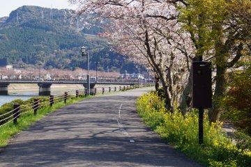 <p>The Cherry Line runs along the Minamata River...</p>