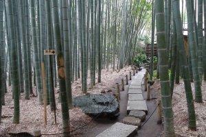 มนต์เสน่ห์ป่าไผ่ วัดโฮะโกะกุ-จิ