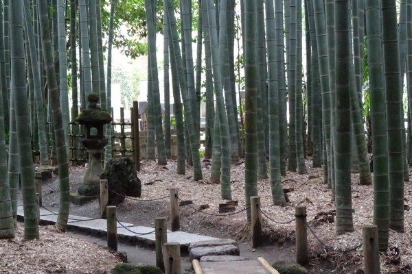 ป่าไผ่แห่งวัดโฮะโกะกุ-จิ