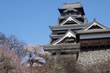 ปราสาทคุมะโมะโตะในวันดอกไม้บาน