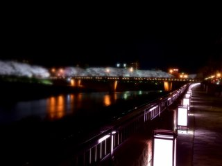 후쿠이 현 아스와강의 빛나는 사쿠라 다리와 강둑 경로의 신비한 경관