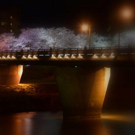 Iluminação das Sakura do Rio Asuwa