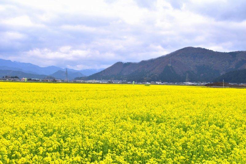 이 노란 꽃들은 모두 내 주위에 있었어!