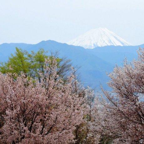 Công viên hoa quả Fuefukigawa ở Yamanashi