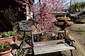 <p>Peach tree and wooden bench at the entrance</p>