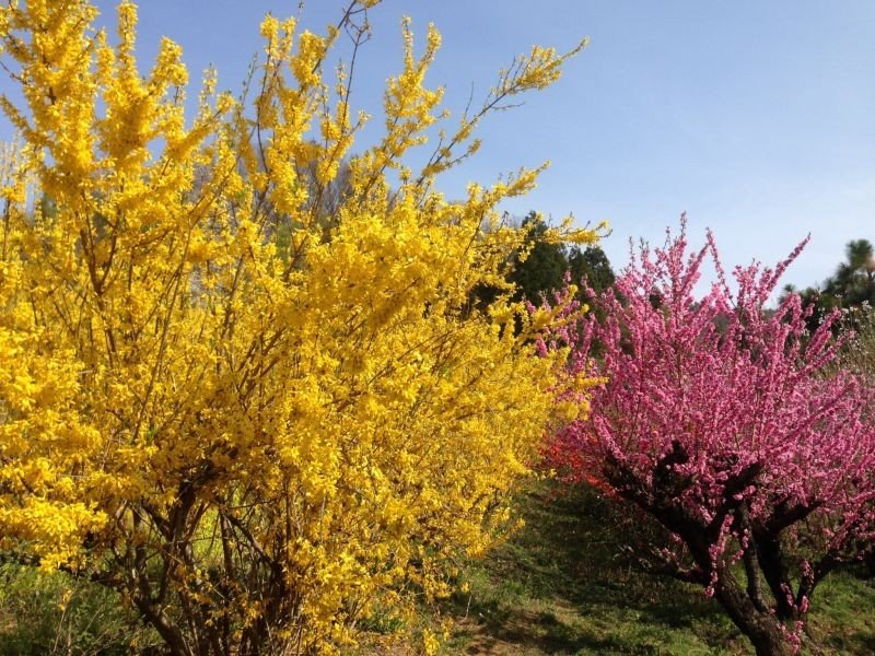 The vibrant colors of spring
