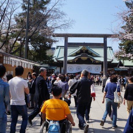 Sakura di Yasukuni Jinja