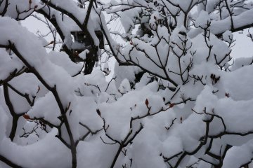<p>เกล็ดน้ำแข็งบนกิ่งไม้แห้งยังสวยบาดตา</p>