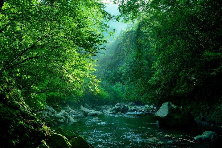 野根川の釣り