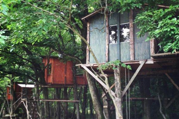 tree house camping in tochigi 栃木 japan travel