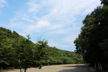 <p>A clear sky and lush green trees</p>