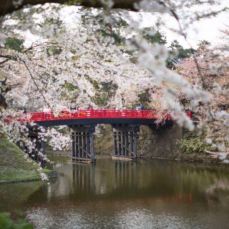 Hirosaki: Sakura Season