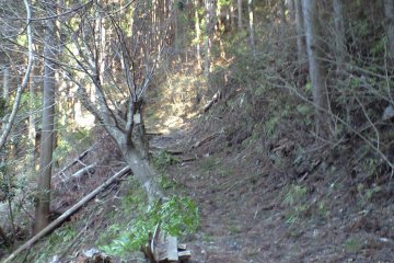 The Shade of Cedars Trail