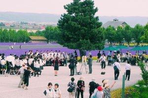 Lavender season in Hokkaido