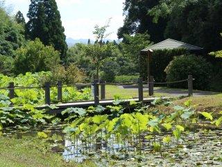 O pequeno caminho que atravessa o jardim de lótus prolonga-se ao longo de cerca de 500 metros