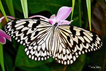 At the Butterfly Garden, Loisir Spa Tower Naha